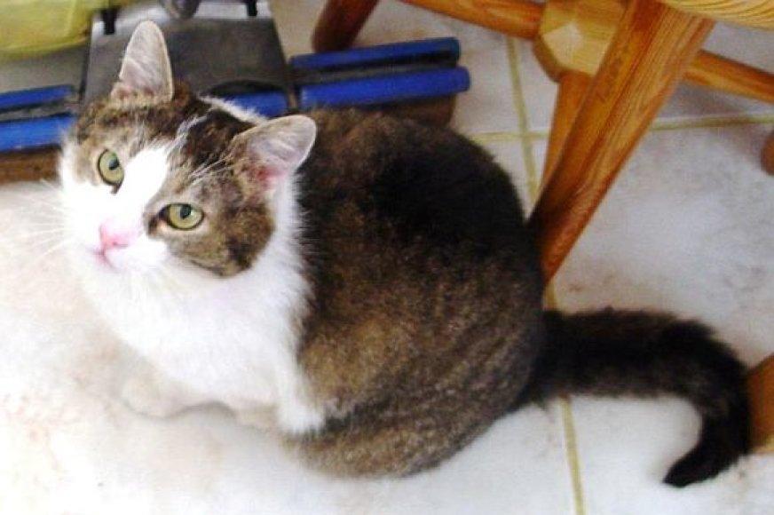 Katinas Ričis