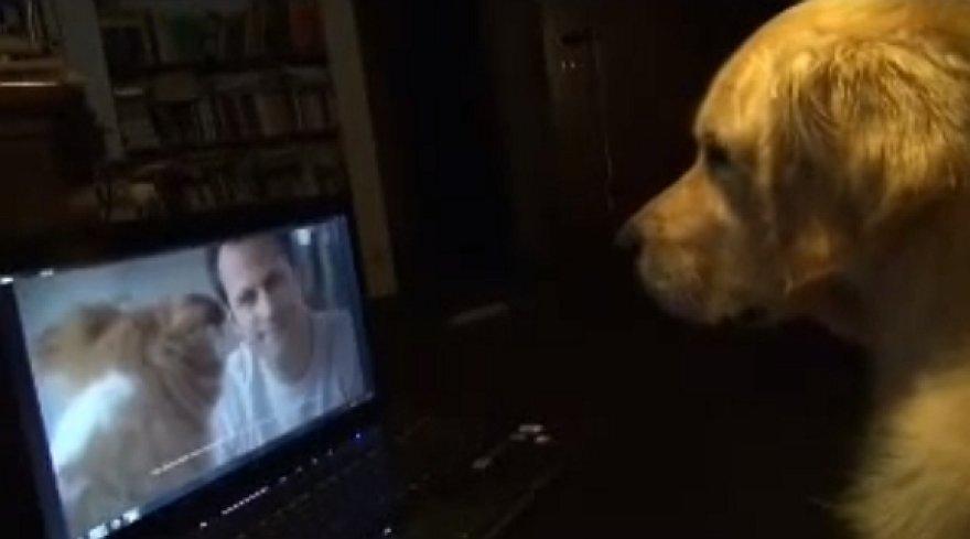 Šuo stebi televizijos reklamą.