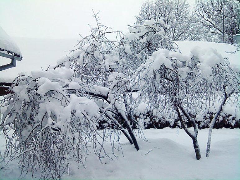 Sniegas Biržuose