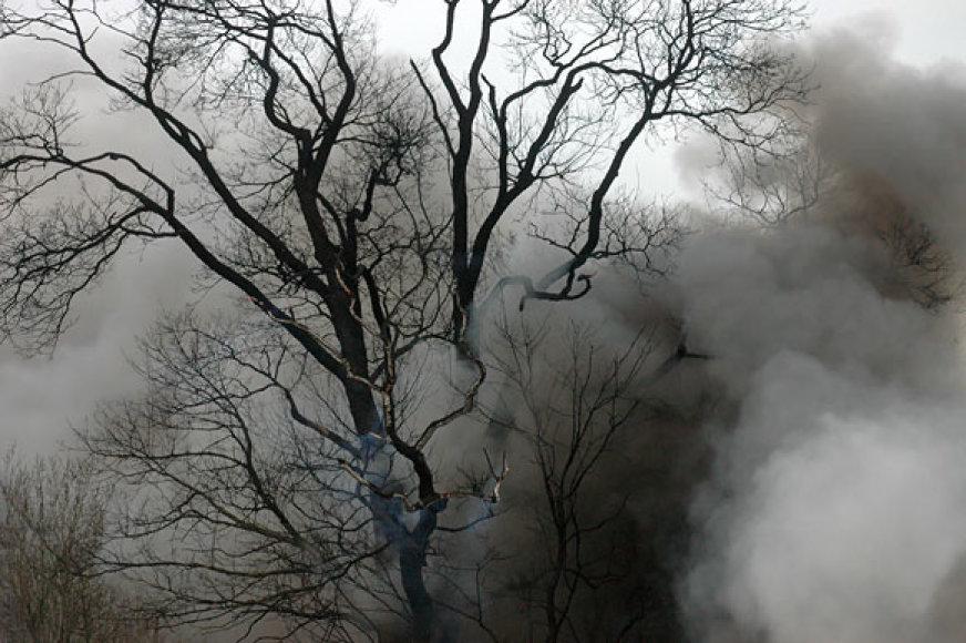 Medis, augantis greta gaisro vietos