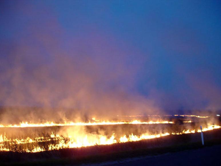 Deganti žolė Elektrėnuose