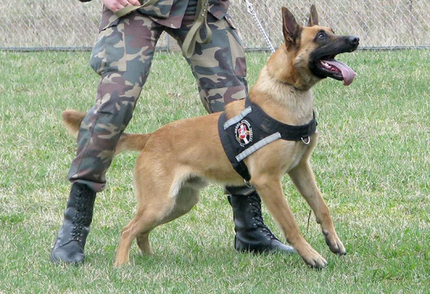 Pasieniečių tarnybinis šuo Hercas