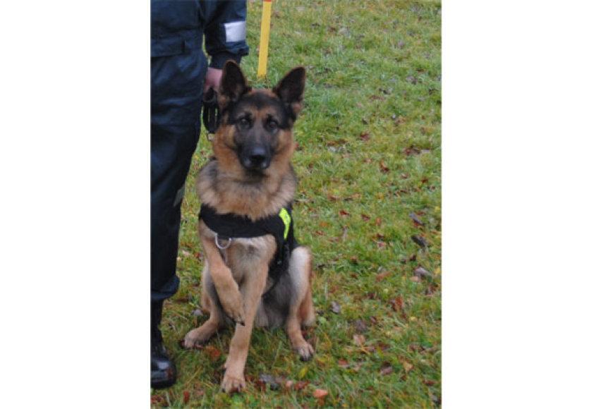 Tarnybinis policijos šuo