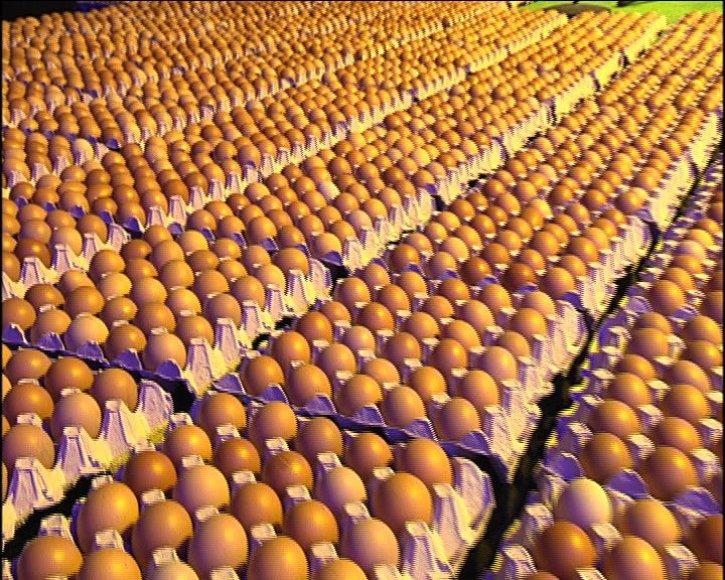 LNK studijoje – 7 tūkstančiai kiaušinių.