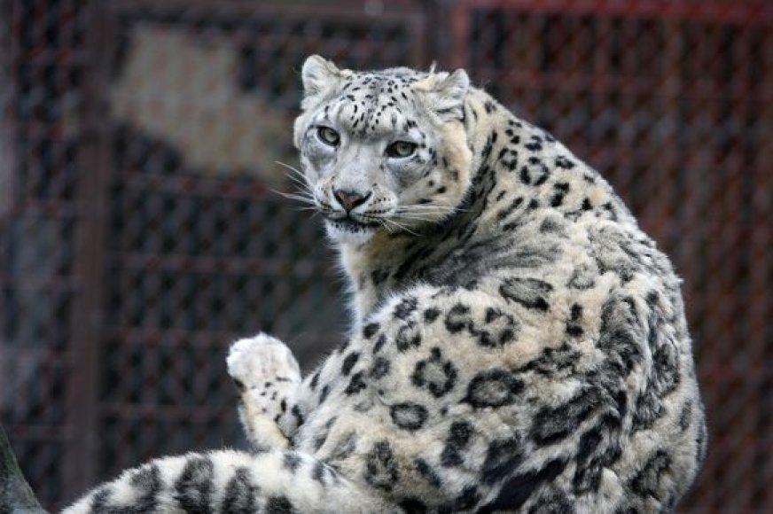 """Zoologijos sodo gyvūnai kol kas sunkmečio nejaučia. Didžiausias jų """"rūpestis"""" – pavasarinis poravimosi metas."""