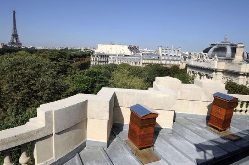 "Aviliai ant ""Grand Palais"" stogo."