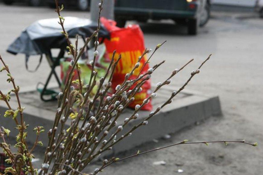 Artėja tikrasis pavasaris.