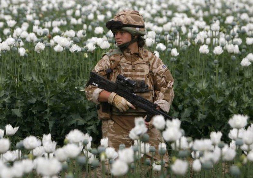 Britų karys Afganistano aguonų lauke