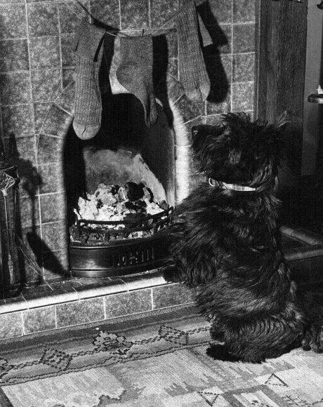 Iš pradžių vaikai kabindavo savo įprastas kojinaites, vėliau buvo sukurtos specialios kojinės Kalėdoms.