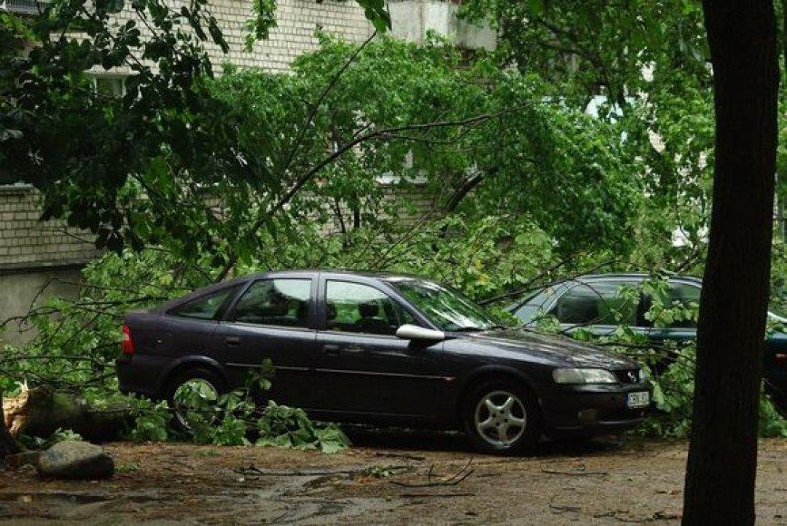 Vilniuje, Parko g., virto medžiai.