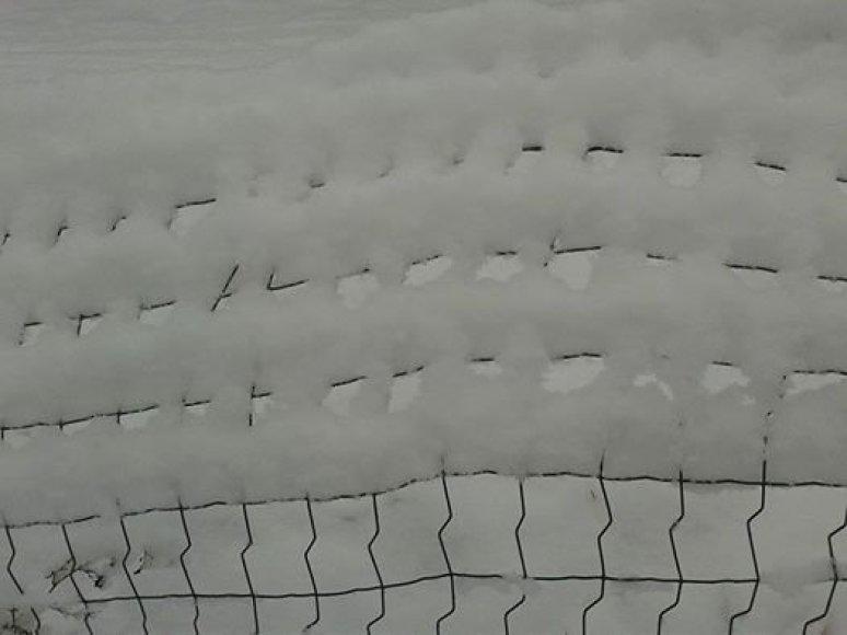 Skaitytojos Vilmos nuotr. žiema Varėnoje