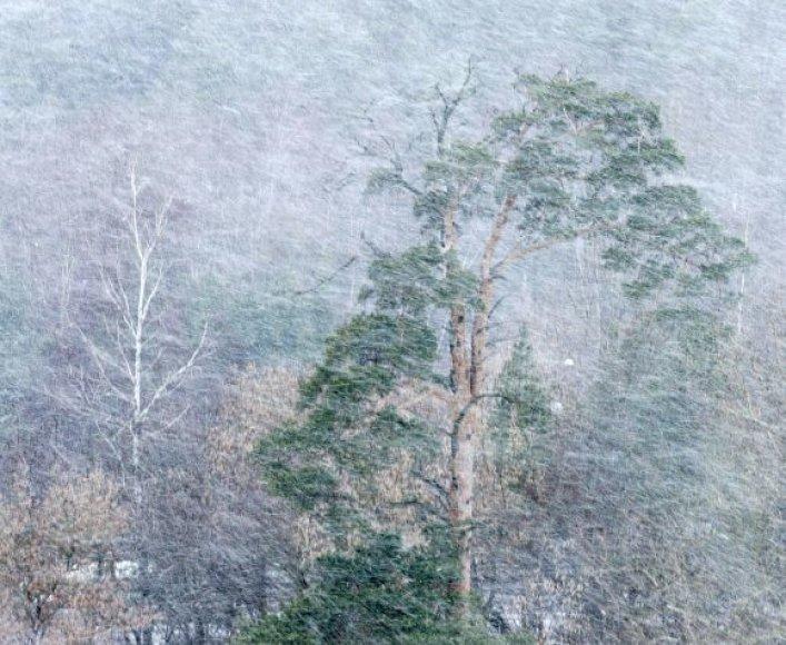 Vėtra su sniegu Vilniuje