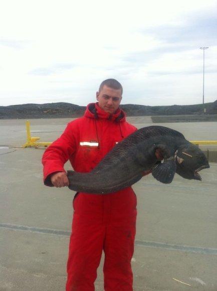 Žūklės laimikis. Deivydo 8,5 kg vilkžuvė