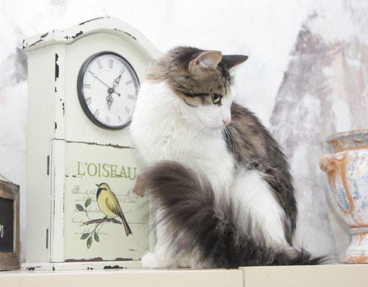 Fifa Katė-voverė
