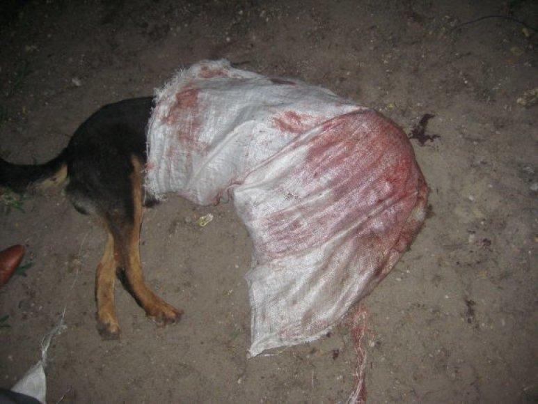 Žiauriai sužalotas šuo