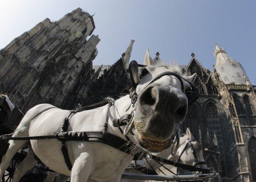 Arkliai, traukiantys karietas, įprastas miesto vaizdas