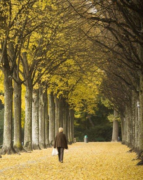 Rudenėjant smagu pasivaikščioti parke...