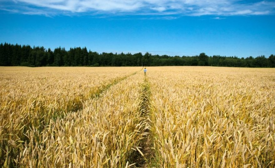 Rekordiškai sumažėjus grūdų kainoms, lengviau atsikvėpė biodegalų gamintojai.