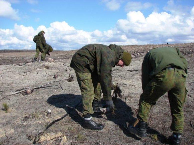 Oro gynybos bataliono kariai sodina pušaites.