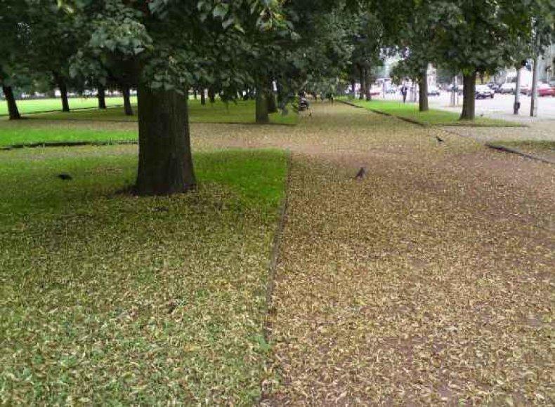 Lukiškių aikštė atrodo kaip rudenį.