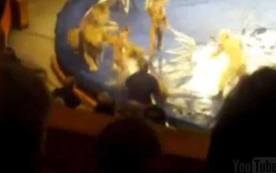 Liūtas užpuolė dresuotoją