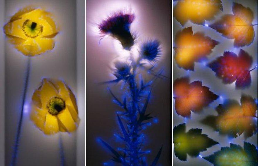 Neįprastas elektros ir augalų menas.
