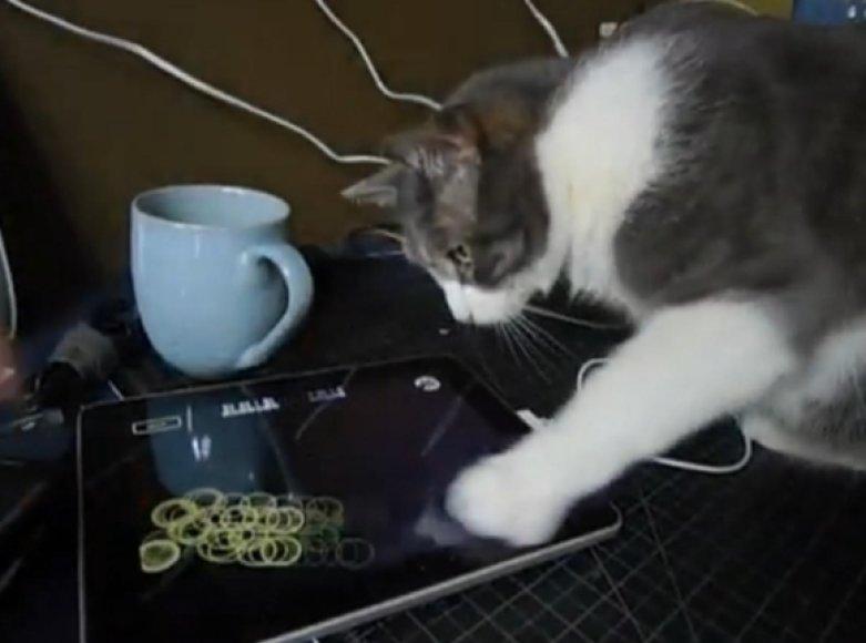 """Katė žaidžia su """"iPad""""."""