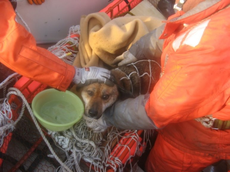 Tris savaites vandenyne ant namo nuolaužų praleidęs šuo buvo išsekęs, tačiau jo būklė buvo pakankamai gera.