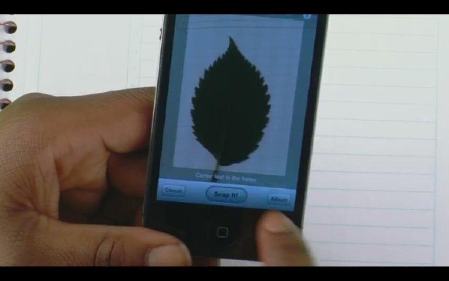 """lProgramėlė """"LeafSnap"""" atpažįsta augalus pagal jų lapus."""
