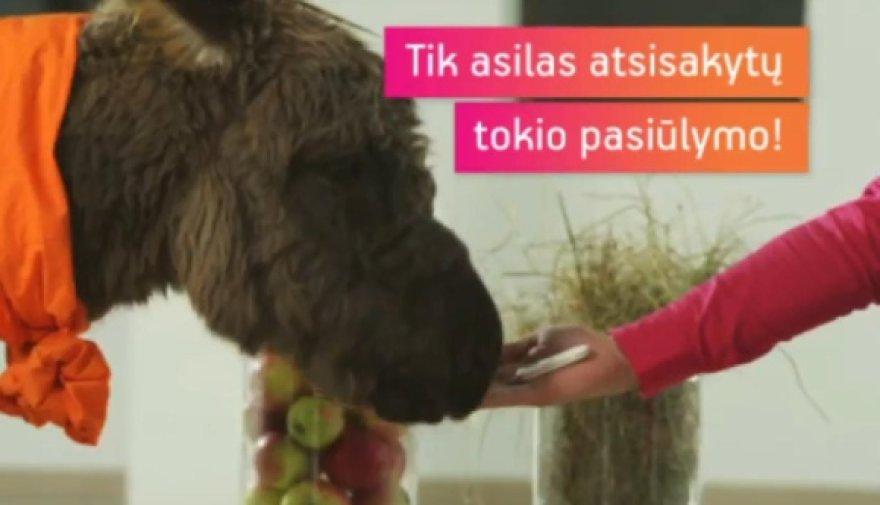 """Lietuvos reklamos biuras teigia, kad mobiliojo interneto """"Mezon"""" reklama, kurioje vartotojai lyginami su asilu, beždžione ir višta, pažeidė Lietuvos reklamos etikos kodeksą."""