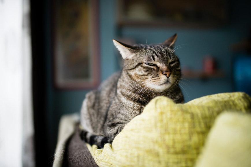 Vida Press nuotr./Katinas