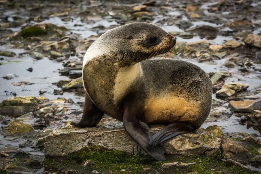 123rf.com/Kerguelen salų gyvūnija būdinga visai Antarktidai