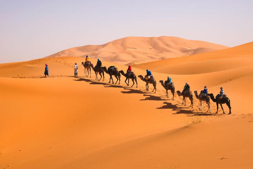 Shutterstock nuotr./Sachara