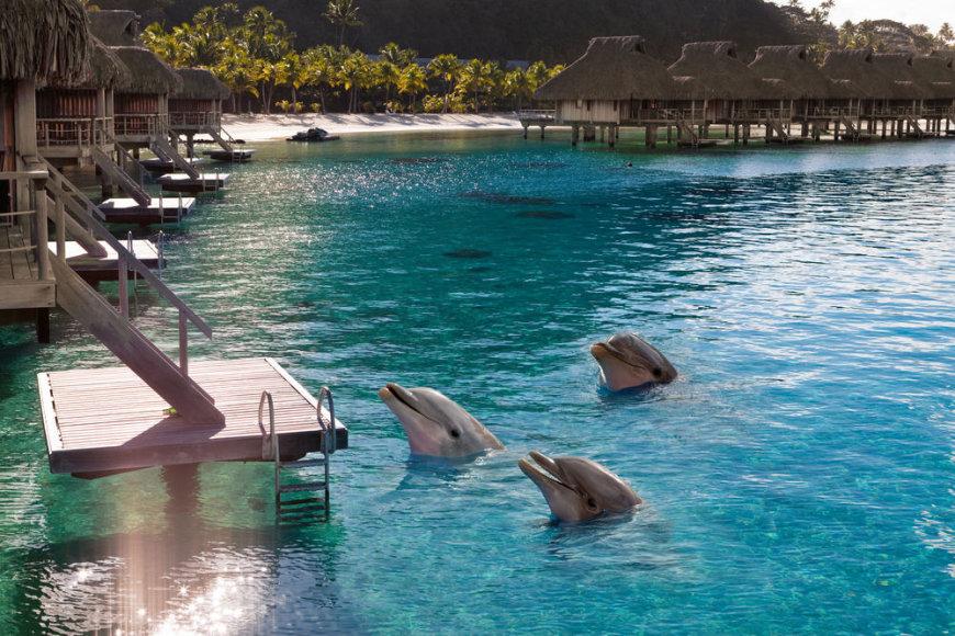 Shutterstock nuotr./Delfinų stebėjimas Maldyvuose