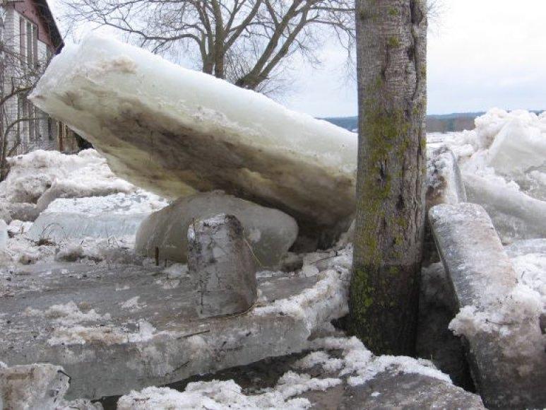 Egzotika: ledo lytys beveik kieme