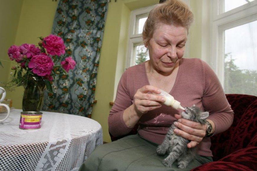 Užmuštos katės jaunikliais, kuriems dar būtina nuolatinė priežiūra, šiuo metu pakaitomis rūpinasi visa Irenos šeima. Nuotraukoje – jos sesuo Raimonda, padedanti maitinti jauniklius.