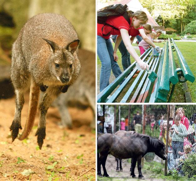 Lietuvos zoologijos sodas sunkmečiu pristabdė darbus. Tačiau jame netrūksta įvairių renginių, naujų gyvūnų. Paremontuoti statinius ar sutvarkyti aplinką padeda ne tik rėmėjai, bet ir privatūs žmonės, pavyzdžiui, jaunimas.