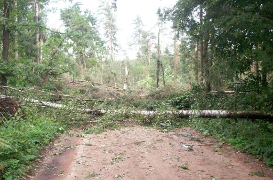 Audros padariniai Kauno rajono miške