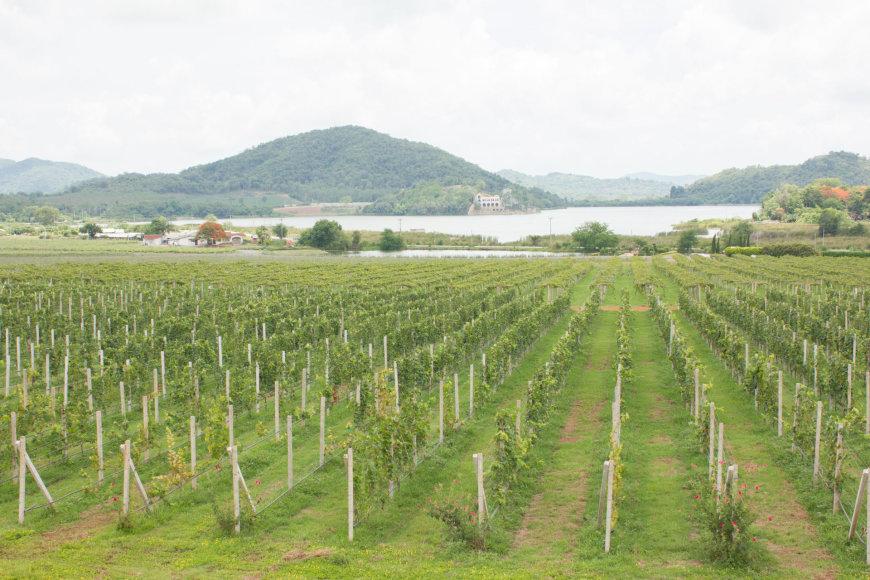 """123rf.com /""""Silverlake Winery Pattaya"""""""