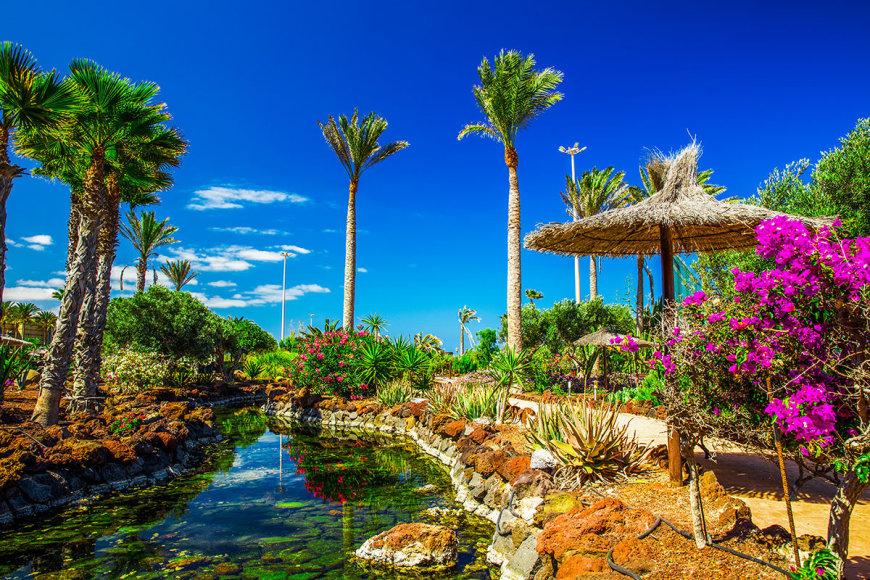 Shutterstock nuotr./Fuerteventura