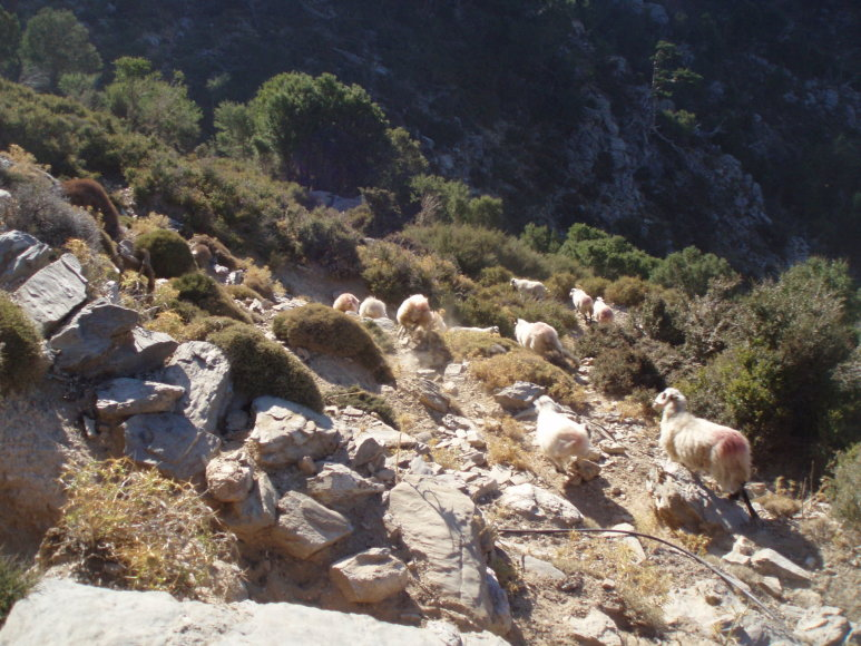George Mazonakis ir Daphne Manoussaki nuotr./Po tokius kalnus karstosi tik avys ir jas ganantys piemenys