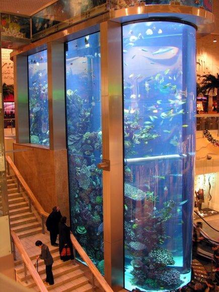 """Prekybos ir laisvalaikio centre """"Mega"""" esantis akvariumas"""