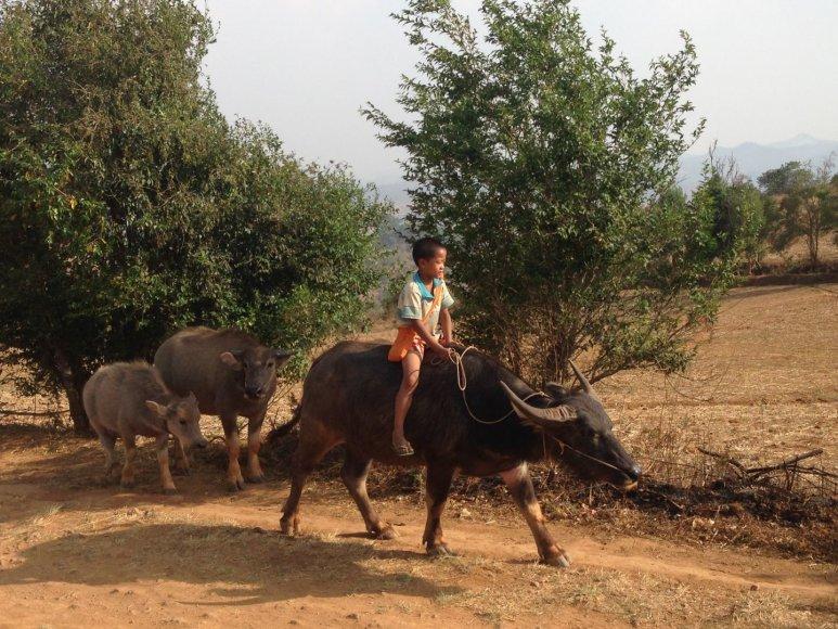Asmeninė nuotr./Vietnamo kasdienybė