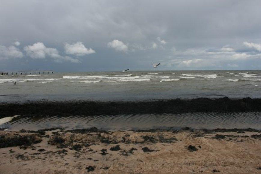 Šiemet jūra išmetė kaip niekada daug žolių.