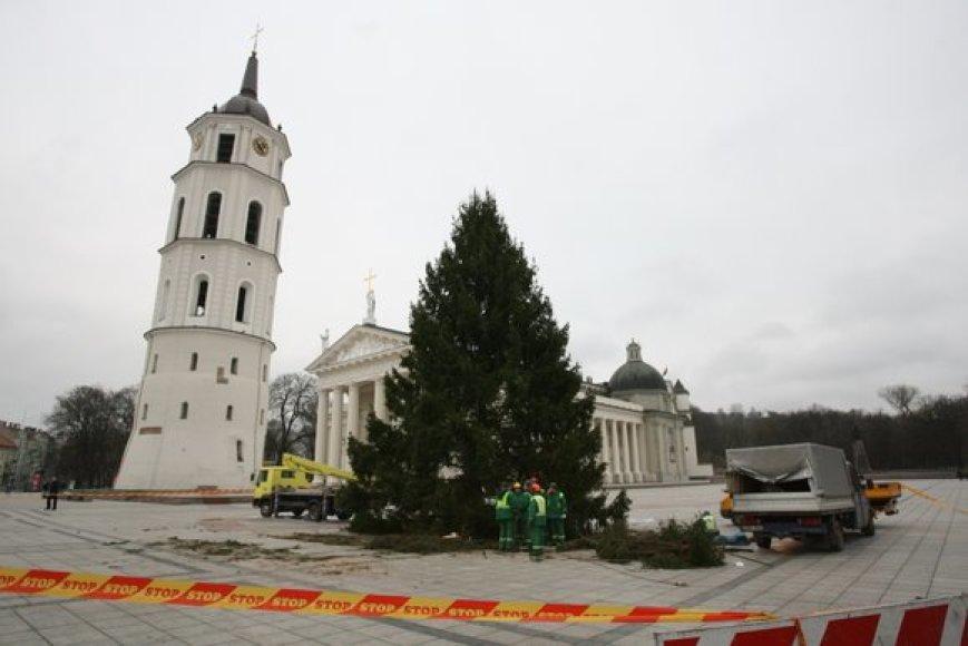 Į Katedros aikštę atvežta Kalėdų eglė
