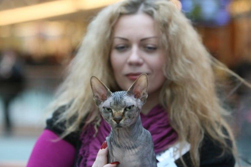 Kačių parodos akirmika