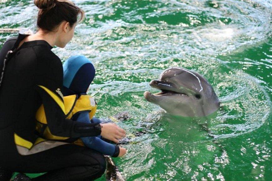 Netrukus bus atsisveikinta su delfinais