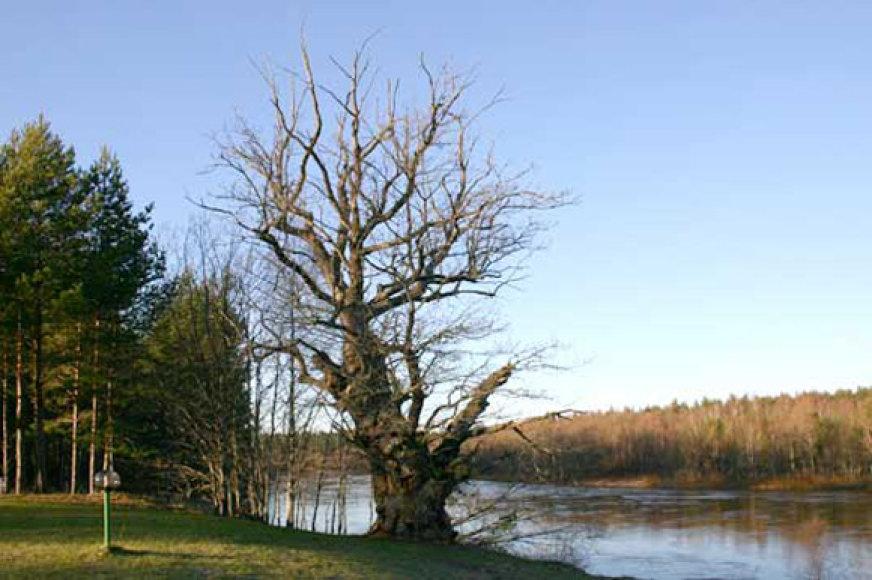 Latvijos visuomenė pareikalavo rimtos bausmės brakonieriams, siaubusiems Gaujos upę