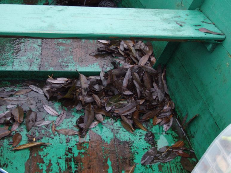 Valtyje negalima palikti lapų, vandenžolių ir prieš apverčiant ją dugnu į viršų reikia ją gerai išplauti