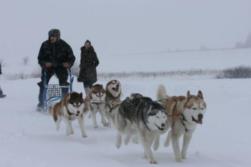 I.Bieliauskaitė ir jos brolis R.Bieliauskas stengiasi nepraleisti nei vienų šunų kinkinių sporto varžybų.